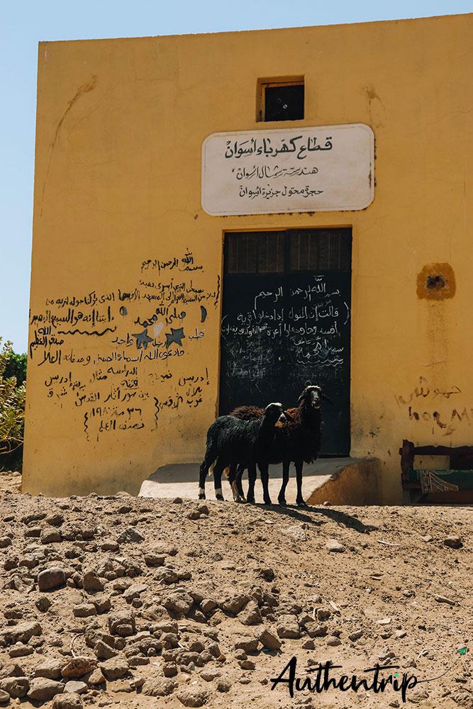 village et chèvres