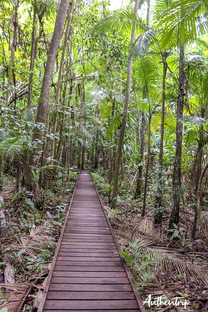 jungle, jardin botanique, cairns
