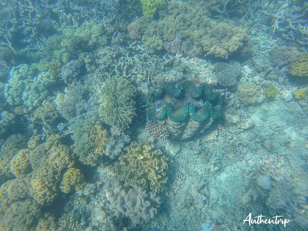 bénitier et corail, australie