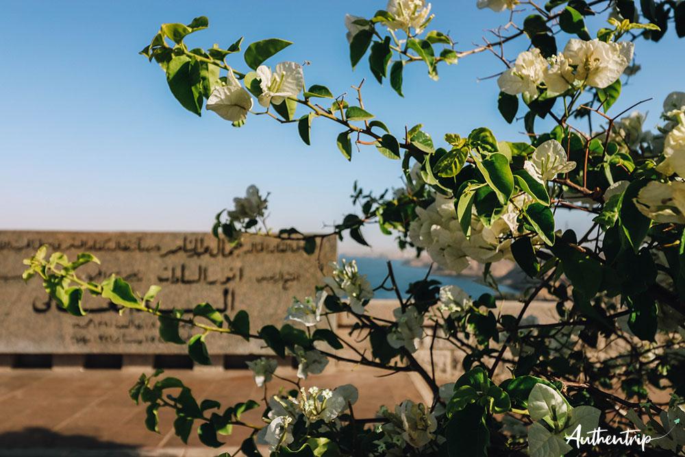 fleurs et haut barrage