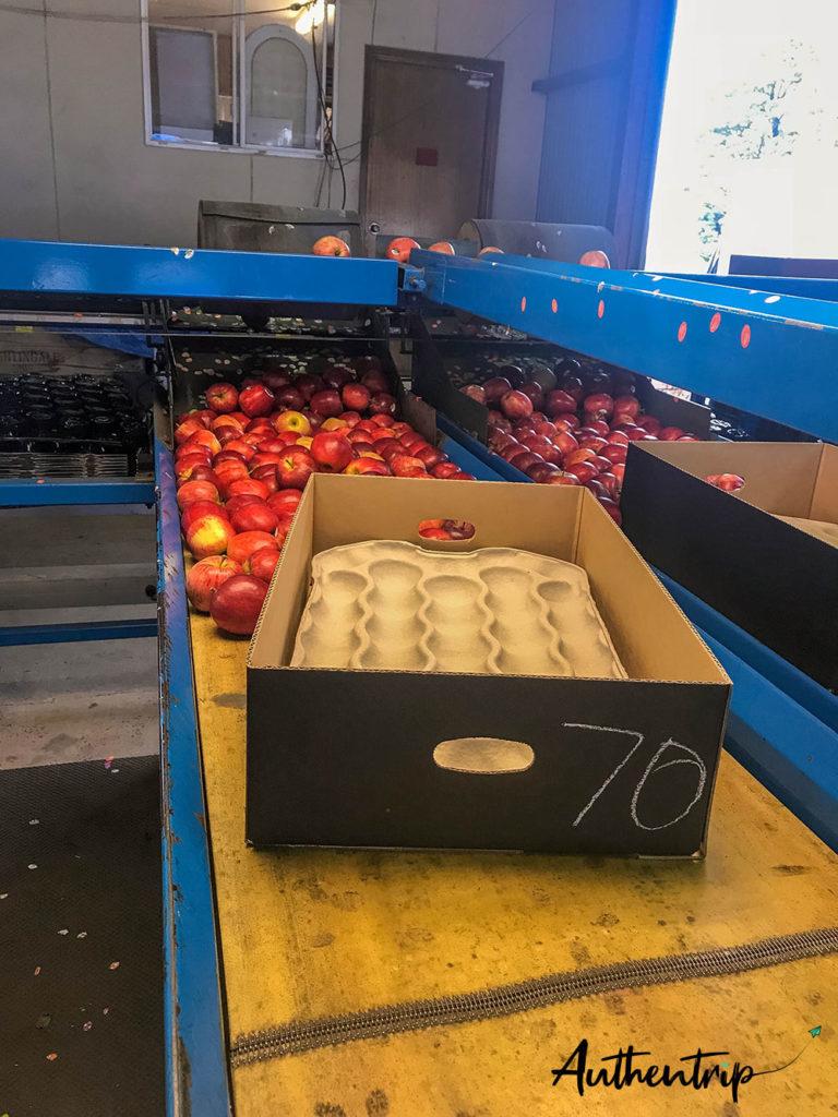 packing pommes ferme