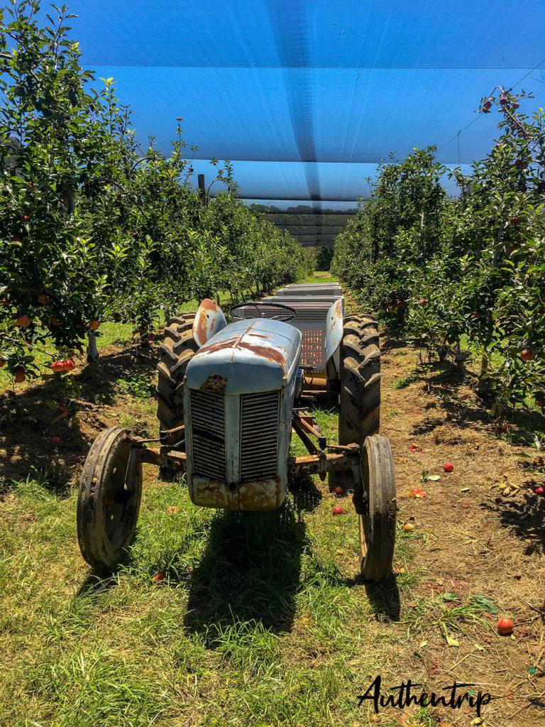 picking pommes ferme