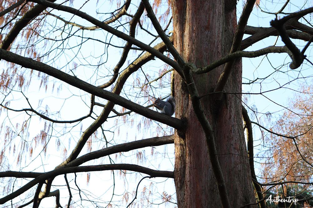 écureuil hyde park