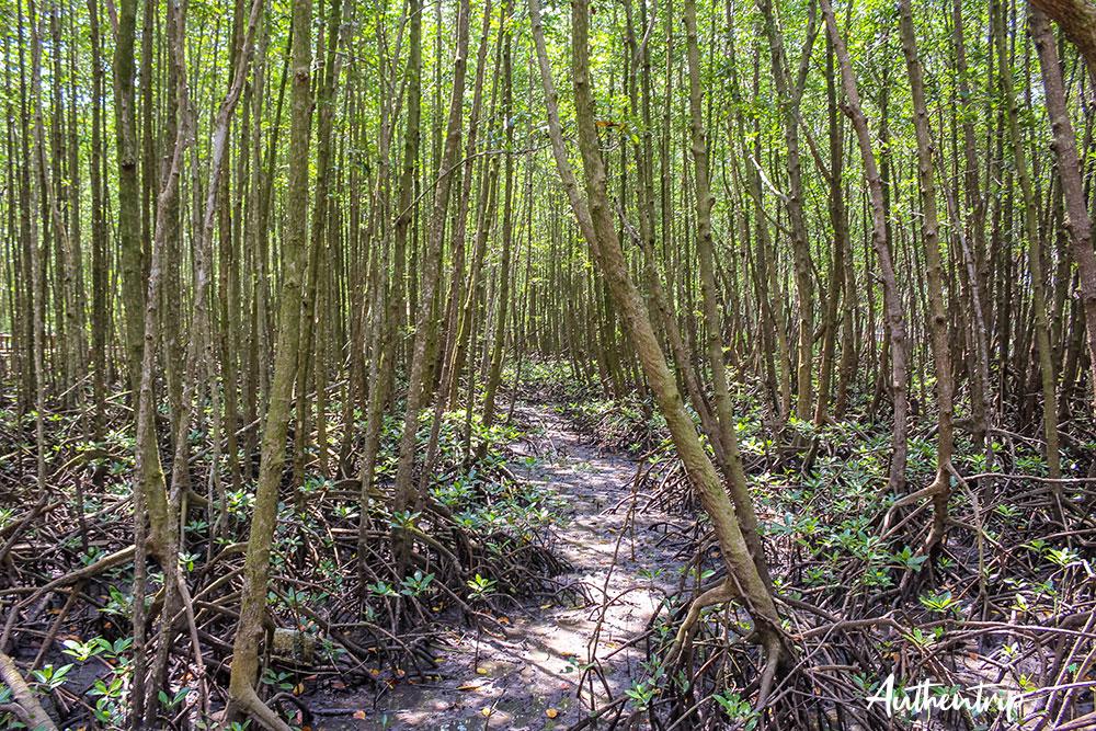 parc national mu ko chumphon mangrove