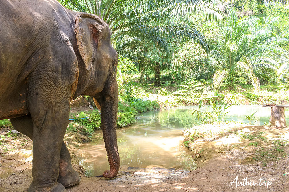 baignade elephant sonchana farm