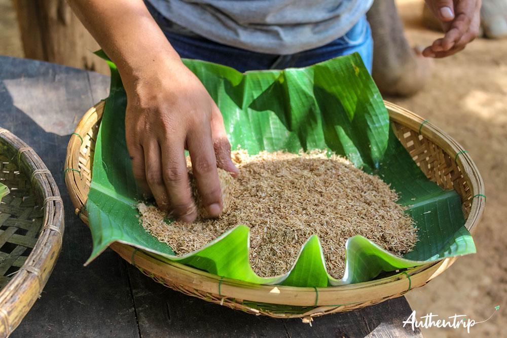 nourrissage boulettes sonchana farm