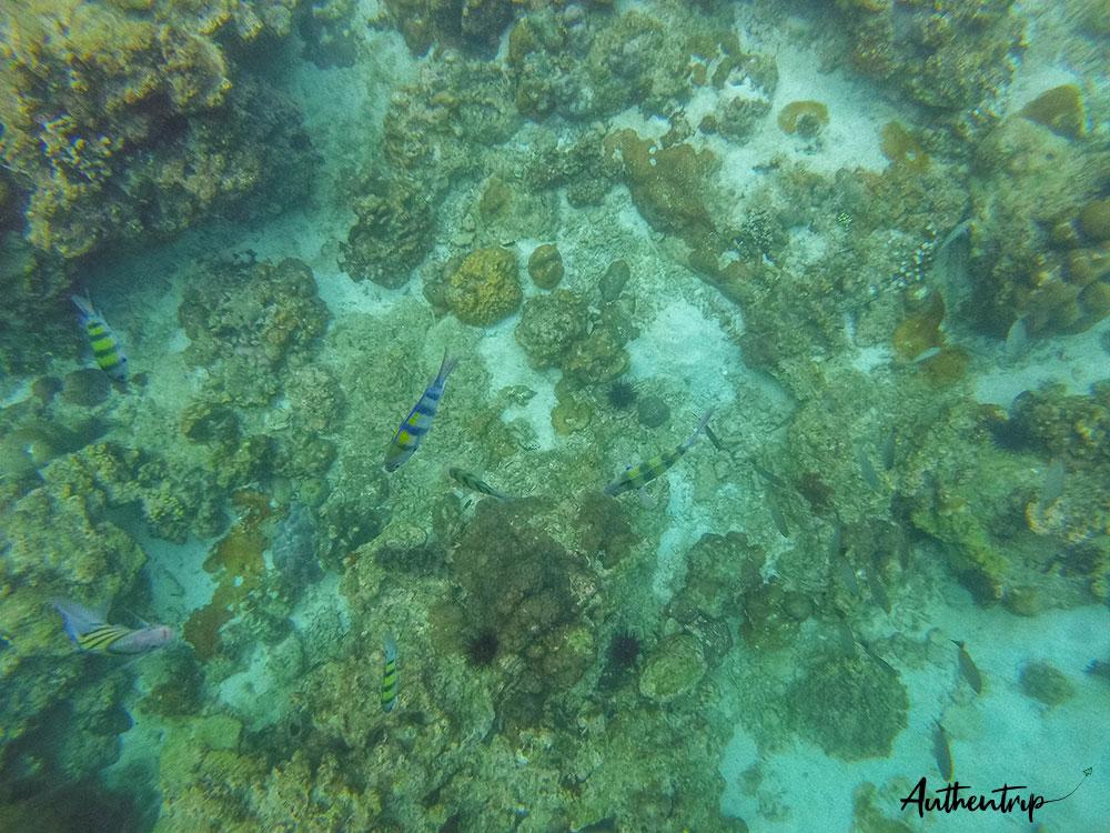 maya bay poissons corail