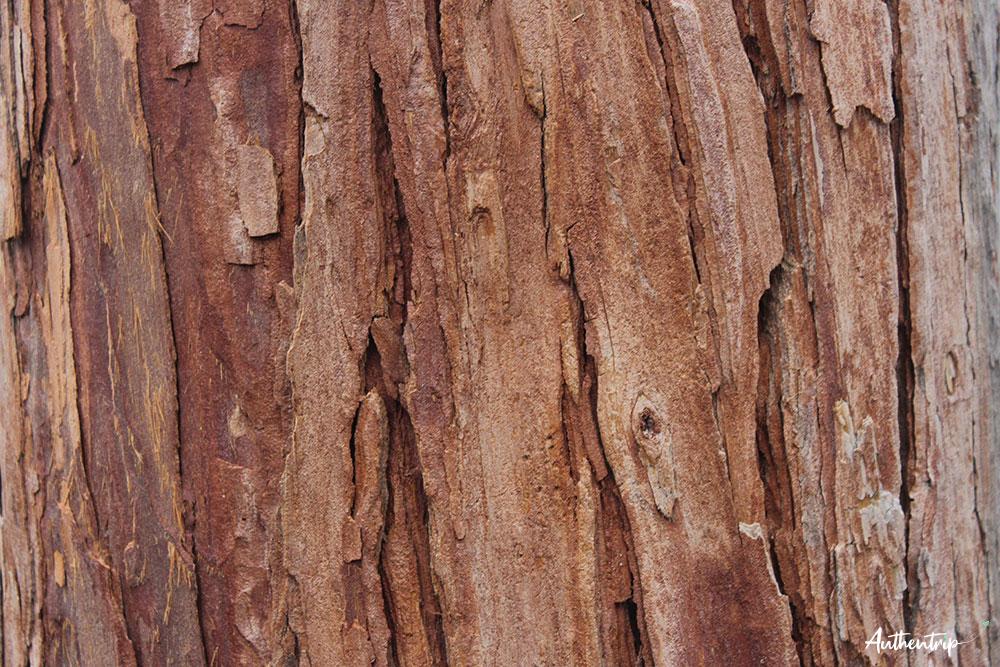 road trip côte ouest états unis séquoia np