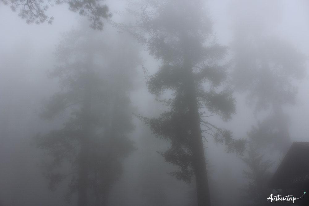 sequoia np road trip côte ouest états unis