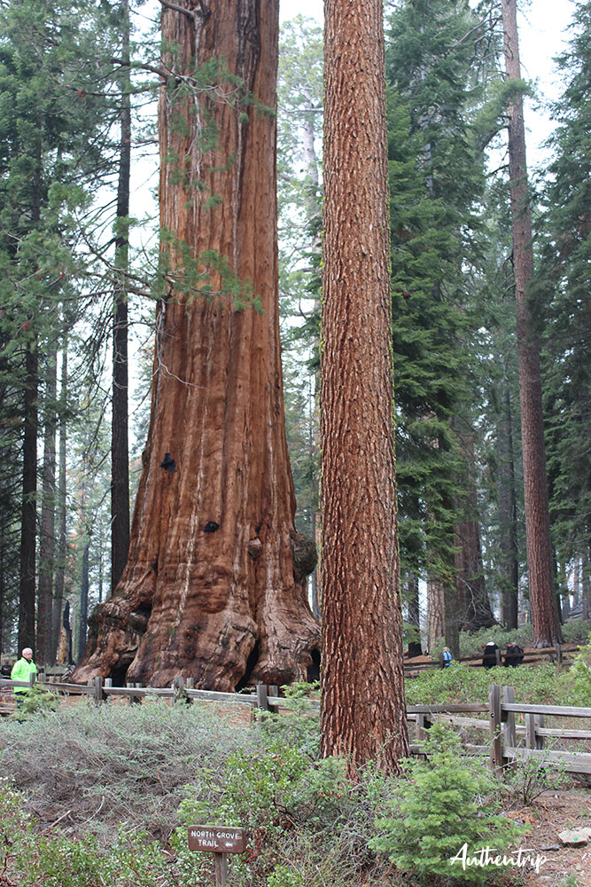 Sequoia National Park road trip côte ouest états unis