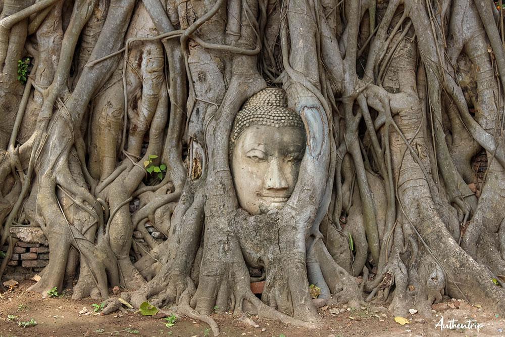 ayutthaya temple tête bouddha arbre