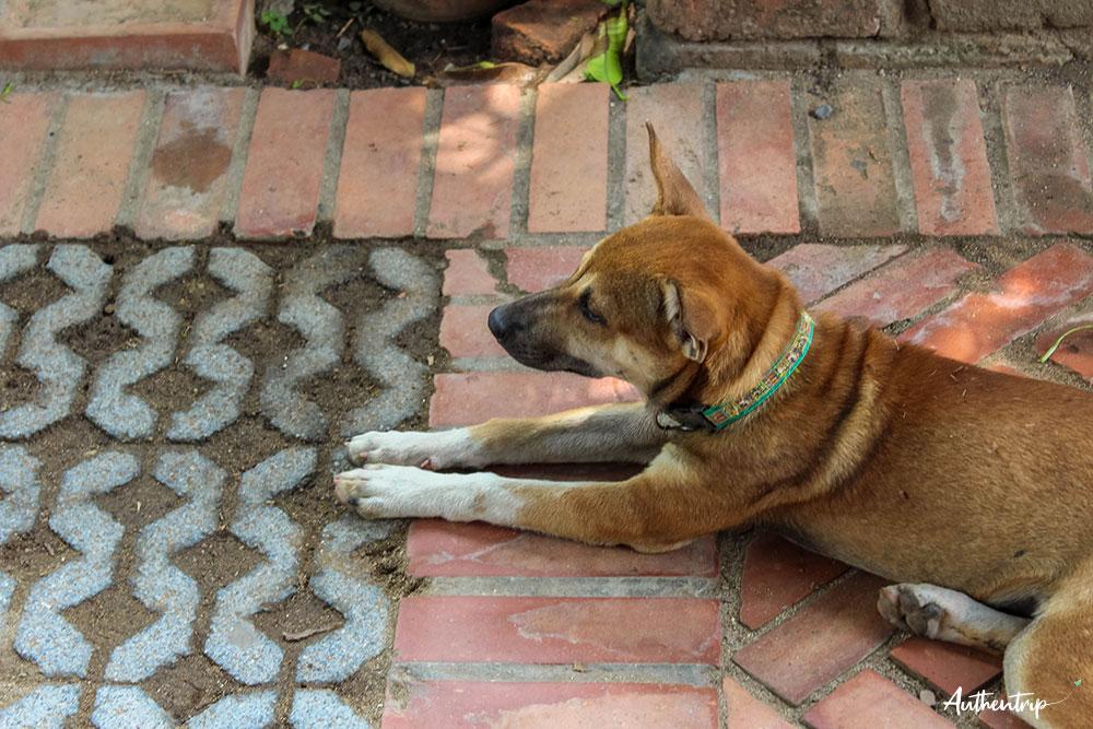 ayutthaya Wat Phra Si Sanphet chien
