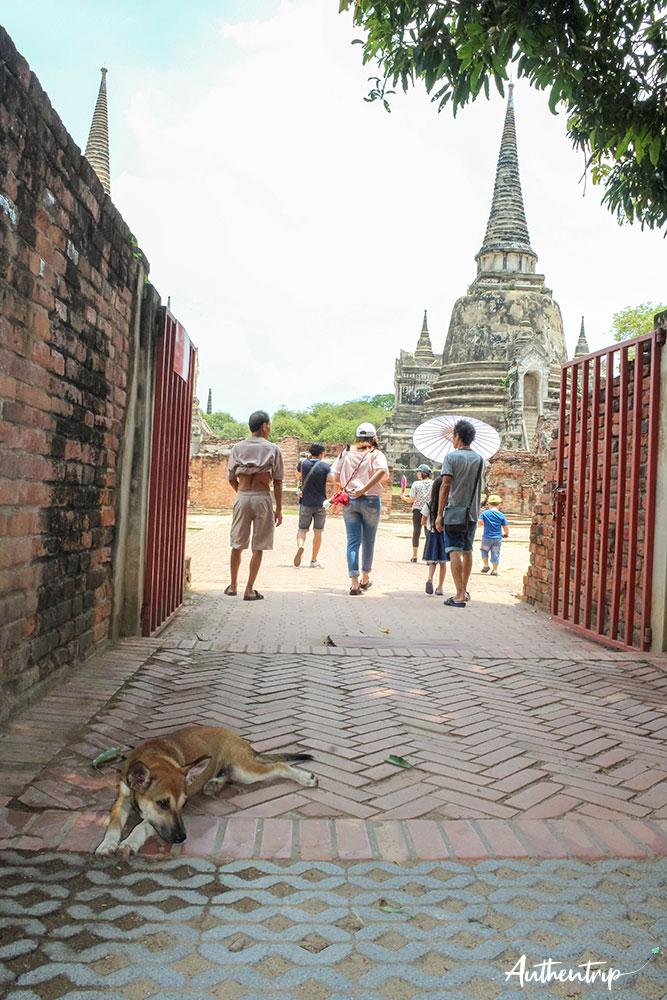ayutthaya temple entree chien