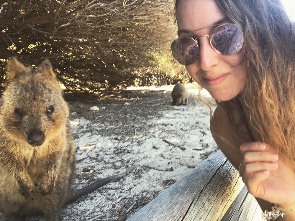 rottnest island quokka selfie