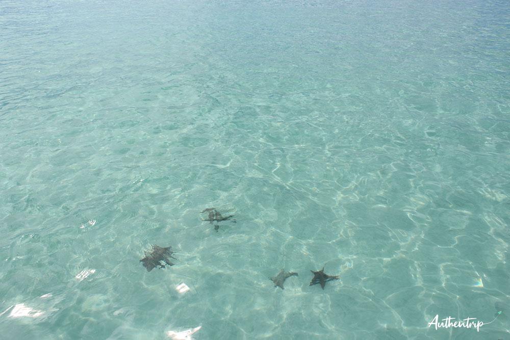 étoile de mer Isla Saona république dominicaine