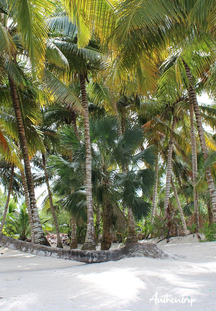 palmiers Isla Saona