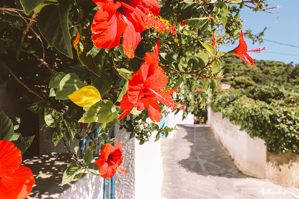 lefkes fleurs