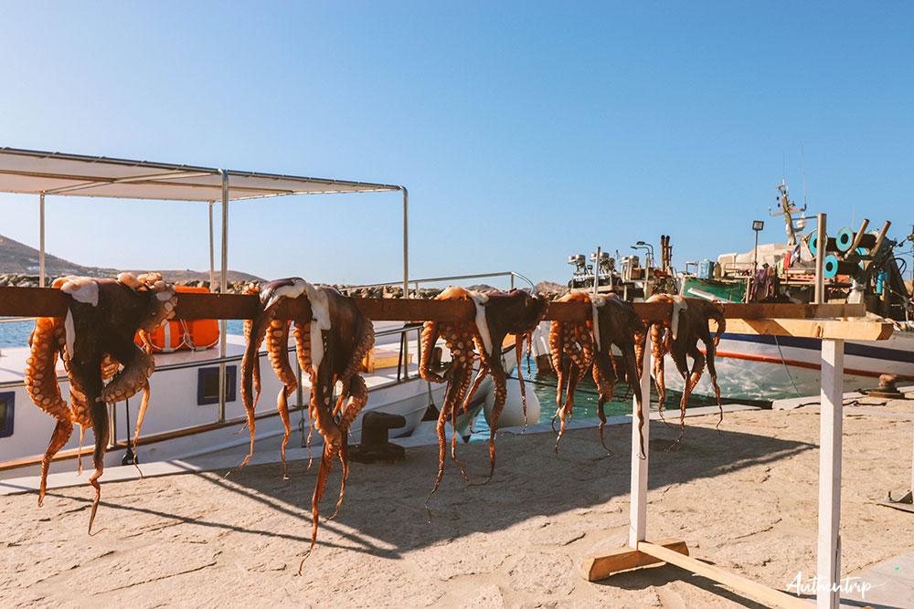Naousa, poulpes