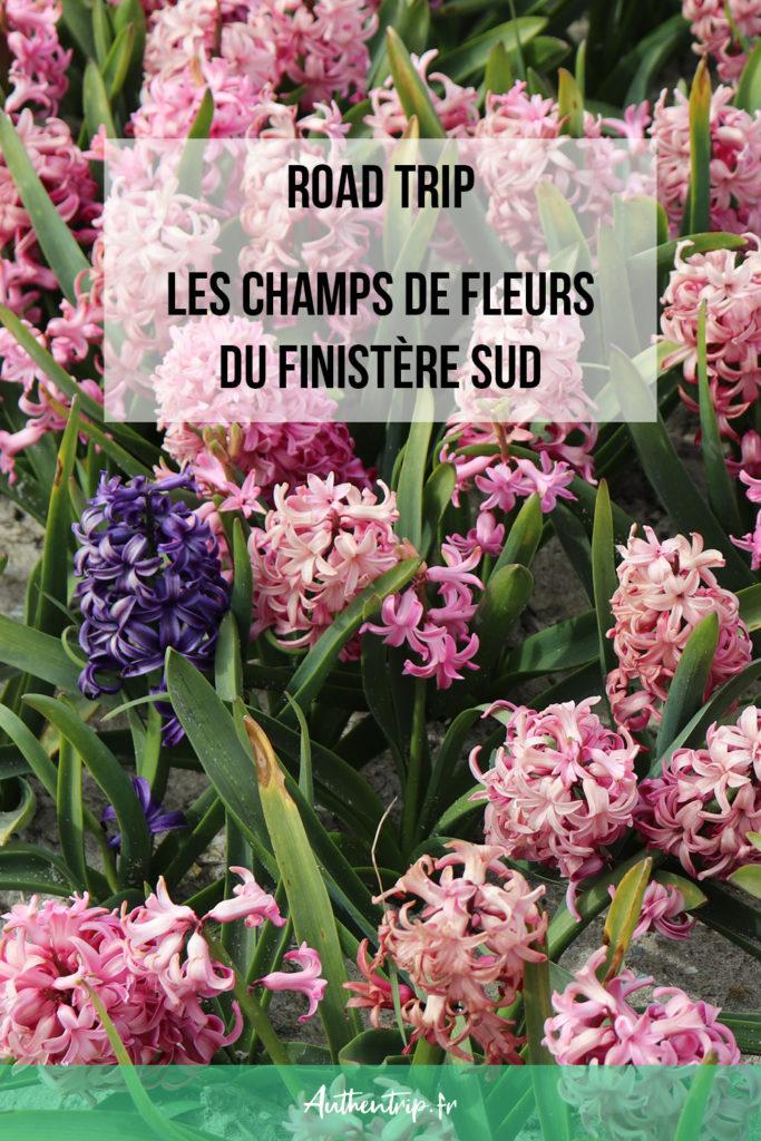 Les champs de fleurs du Finistère Sud
