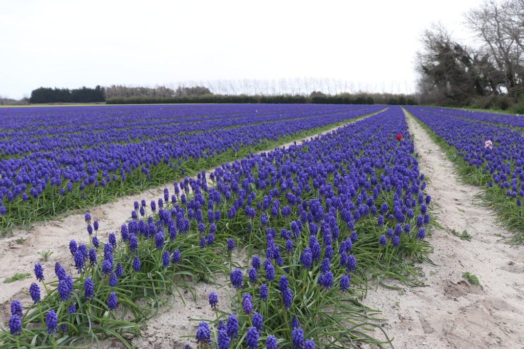 champs fleurs finistère sud plomeur